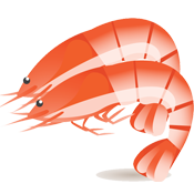 Shrimp Icon 3